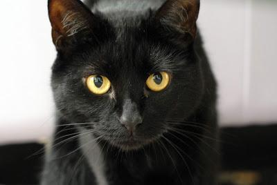 [新聞] 波蘭迷信 – 黑貓帶來不幸?